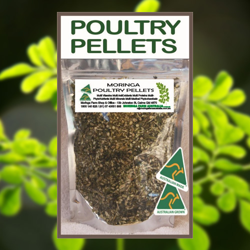 Moringa for Poultry