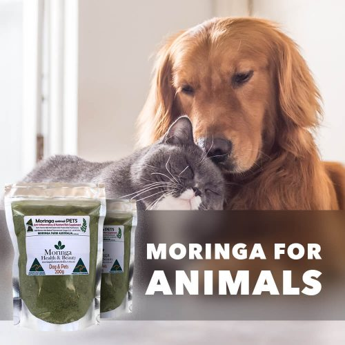 Moringa for Animals